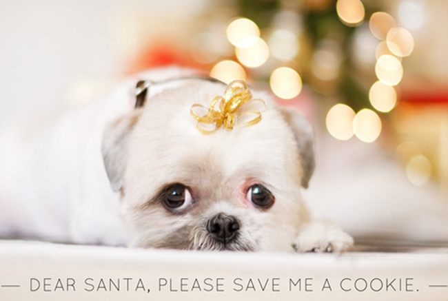 Щенок в ожидании Рождества