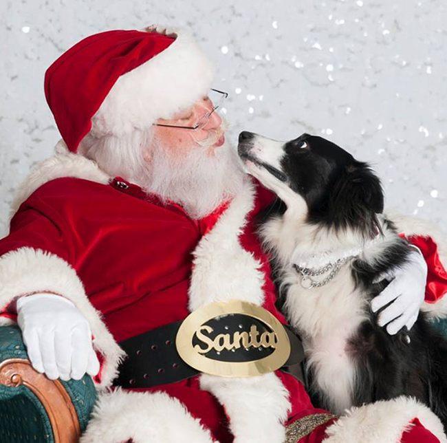 Собака и Санта