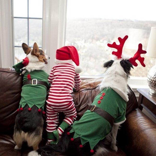Дети и псы ждут Санту