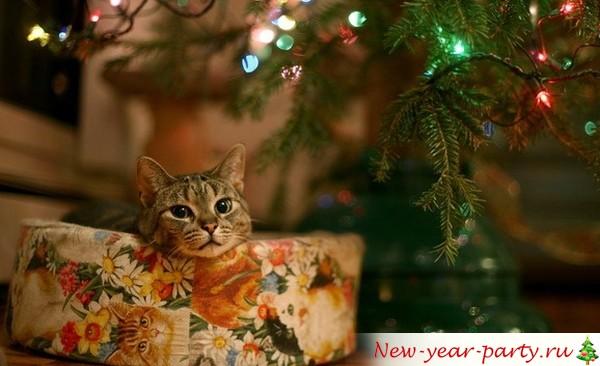 Новогодний подарок с котиком