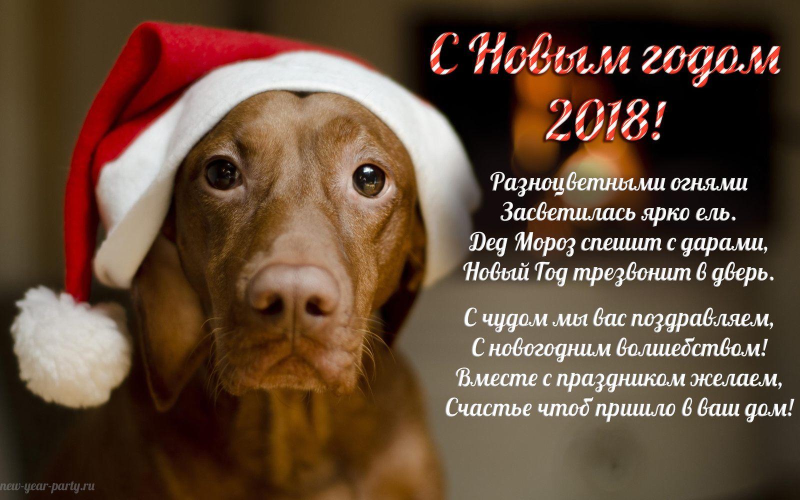 Открытки с поздравлениями собак