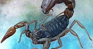 skorpionov1