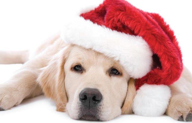 Новогодние вытынанки на год Собаки